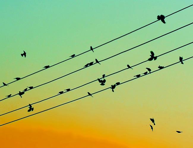 Communicators staying current via Twitter chat: IABC/Toronto [case study]